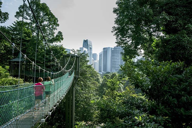 Bukit-Gasing-KL-Forest-Eco-Park