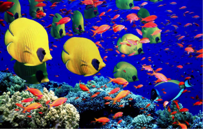 b2ap3_thumbnail_colorful-fishes.png
