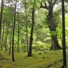 BEGIN Japanology - Moss Plants In Japan 蘚類