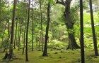 BEGIN Japanology - Moss Plants In Japan 蘚類
